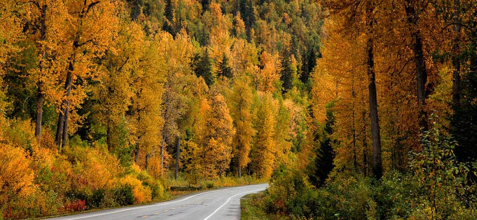 Autumn in the Chilkat Valley