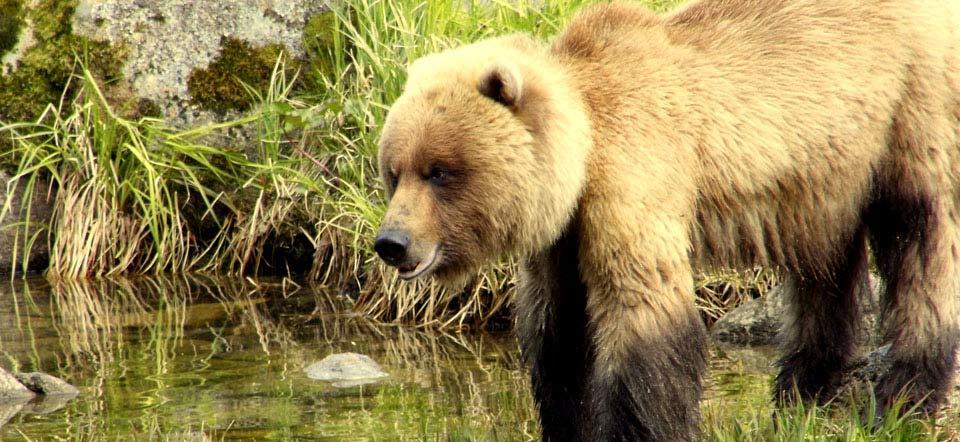 Returning Bears 2013